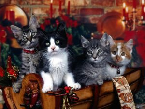 kerstmis katten